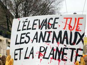Réchauffement climatique : la faute à l'élevage ?