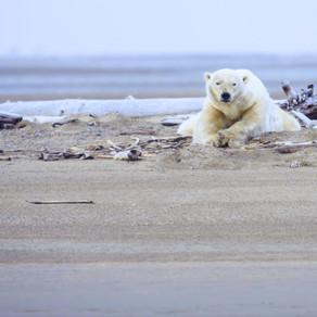 2050 : que s'est-il passé en 30 ans pour les animaux ?