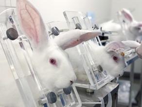 Initiative contre l'expérimentation animale : décodage