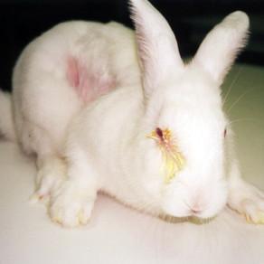 Les dessous de l'expérimentation animale en Suisse