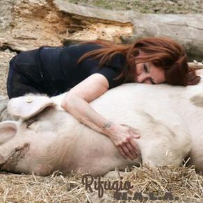 Italie • La cause animale en Europe