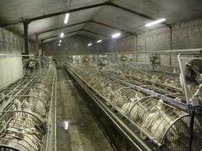 Les pays producteurs et importateurs de foie gras: the Good, the Bad and the Ugly