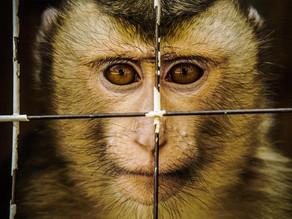 Antispécisme & co : la cause animale à travers différents courants