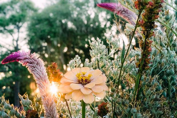 Wildflowers August 16-2020-1965.jpg