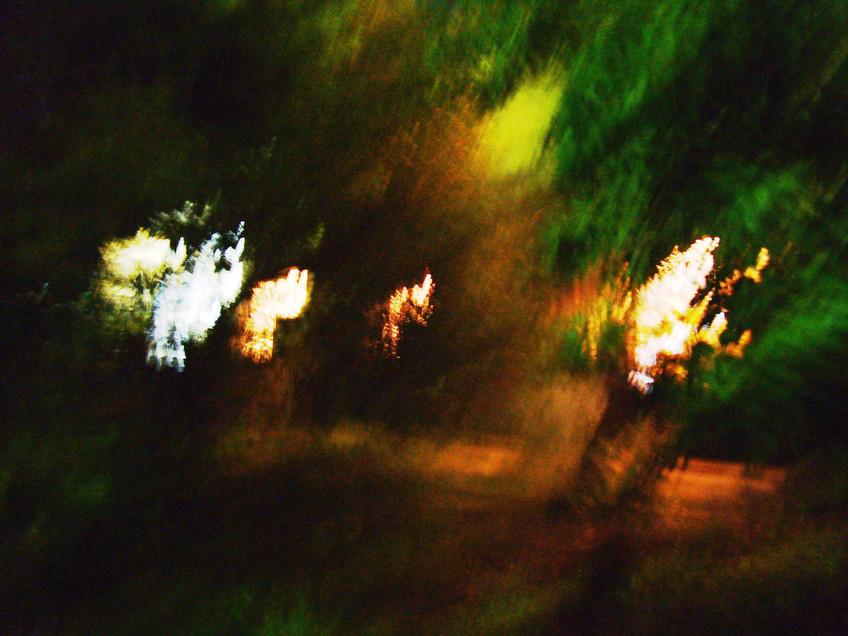 עותק של הבוסתן בלילה 3.JPG
