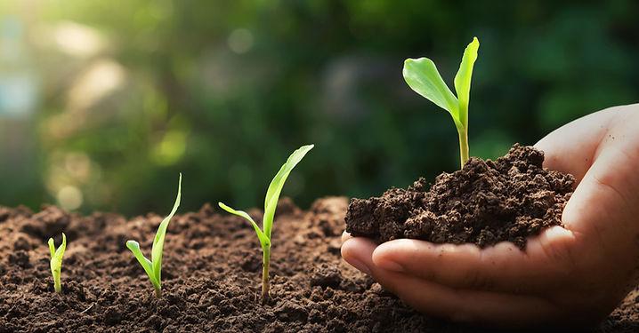 seedlinginhand.jpg