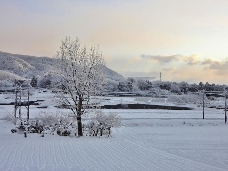 雪景色とポプラ