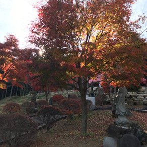 観音寺の秋は今が盛りです