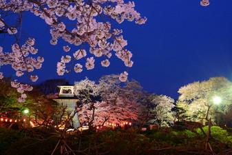沼田公園の夜桜と鐘楼