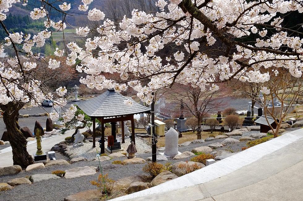 2021_桜.jpg