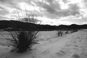 凍てつく桑の木