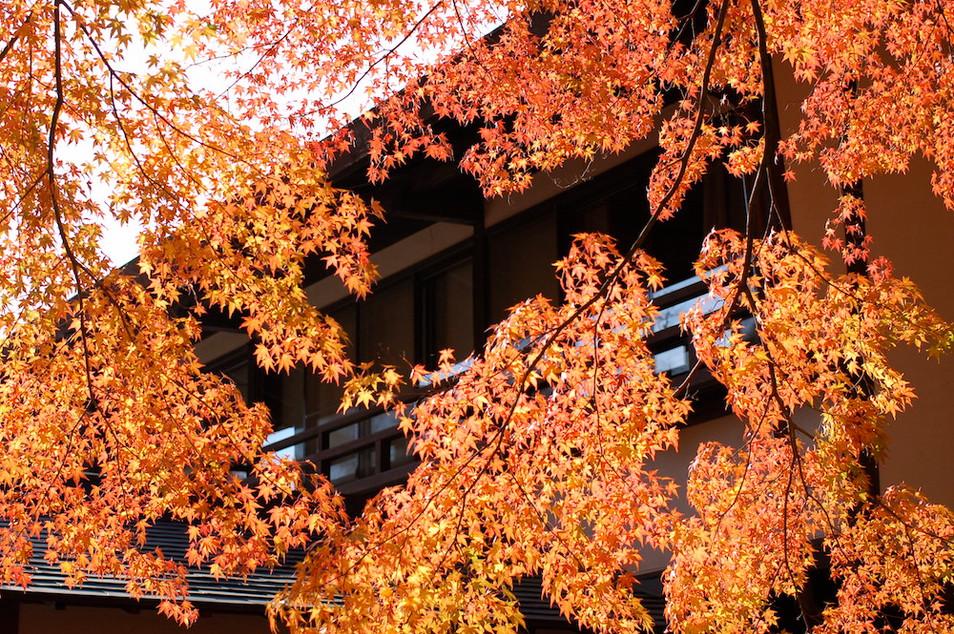 紅葉の中の宿