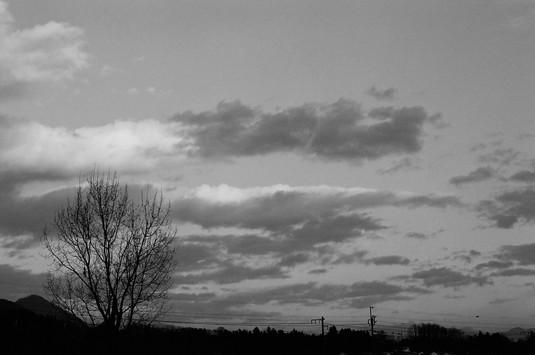 ポプラの木と雲