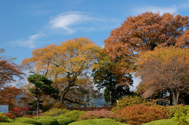 秋の御殿桜