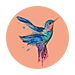 colibri1.png