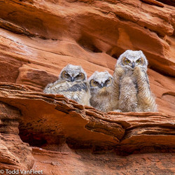 The baby owls