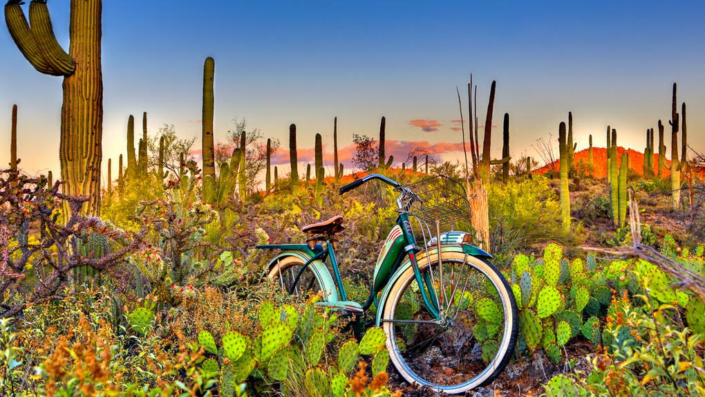 SaguaroNationalPark.jpg