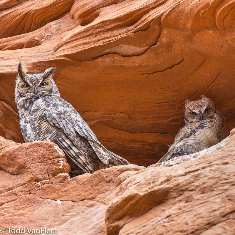 I found the owls!