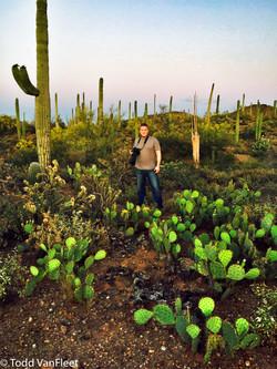 Humungous cactus!