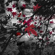 Maple Leaves 16x16 120.jpg