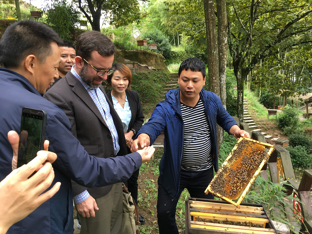 Organic honey in Zhejiang