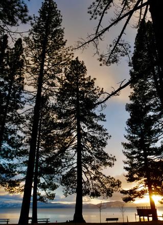 Up through trees Sunset LT.jpg