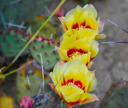 flowers in desert.jpg