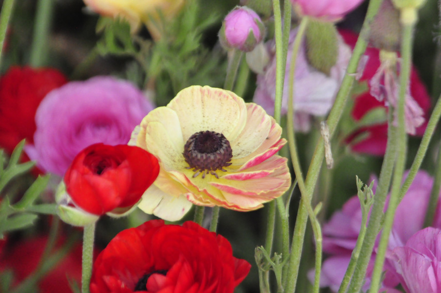 Apr192014_The Flower Farm Calabasas_0089