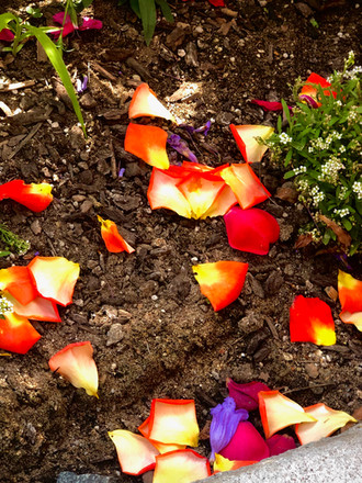 petals from roses IMG_7498-studio.jpeg