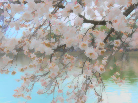 Cherry Blossoms frosty.jpeg