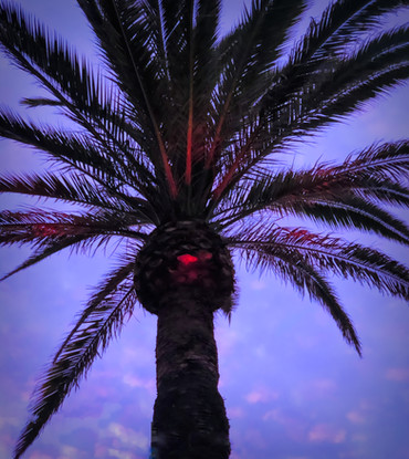 Palm tree with 3rd eye red IMG_6369-stud