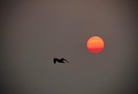 Icarus away