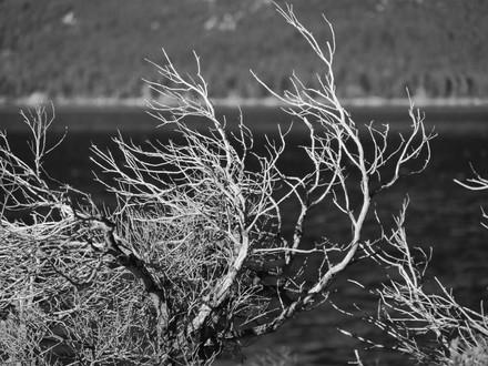Brittlewood close up LT.jpg