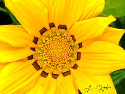 yellow starfire