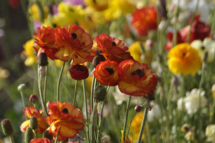 Apr192014_The Flower Farm Calabasas_0115