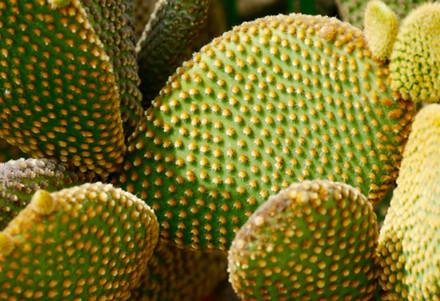 green cactus leaves.jpg