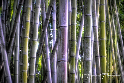 Bamboo in the Middle