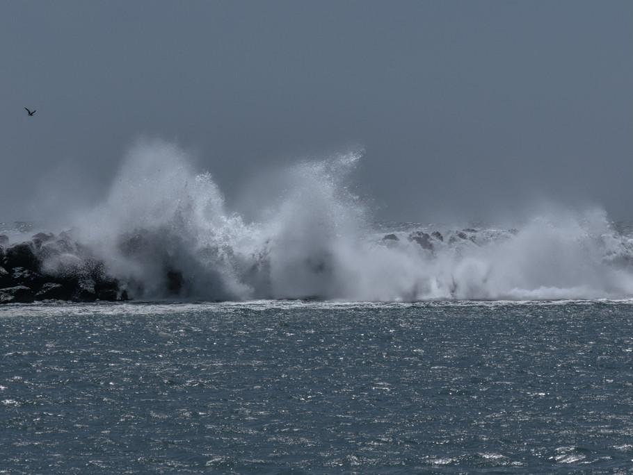 Waves with Bird.jpeg