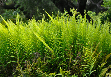 ferns for you.jpg