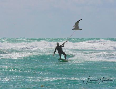 Flying a bird copy-1507069579140(1).jpg