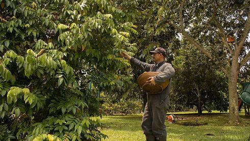 Enfocandonos el la naturaleza y la sostenibilidad turistica ambiental, recolectamos comida de nuestros propios cultivos organicos