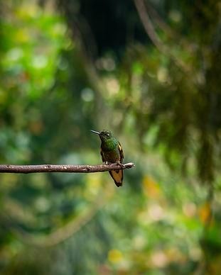 Avistamiento de mas de 120 aves exoticas, nativas de la region Colombiana