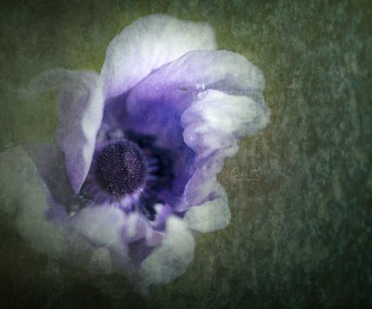 flower with green texture web.jpg