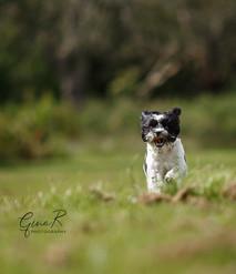 Belle puppy fun.jpg