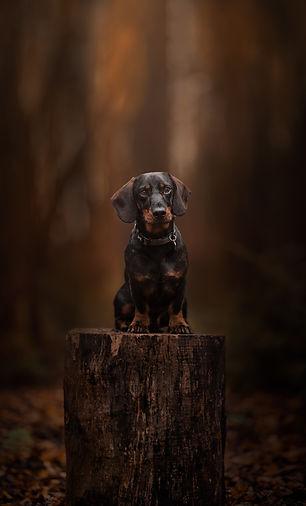 Monty Portrait Top 100 shortlist.jpg