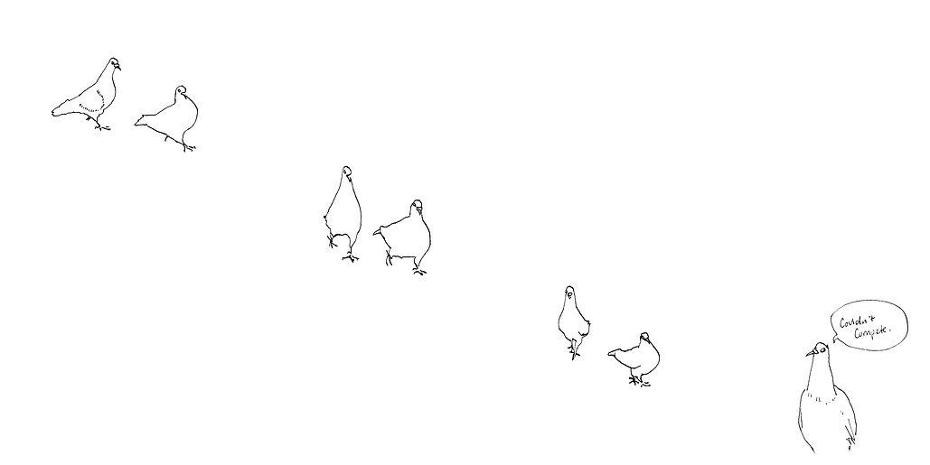 Pigeon Dance.jpg