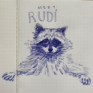 Rudi: the socially anxious raccoon