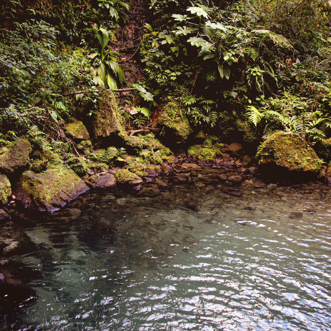 Emerald Pool, Dominique