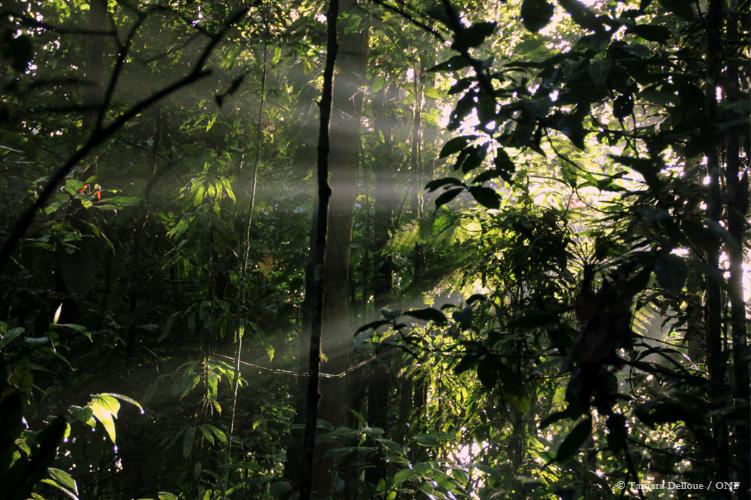 La forêt et la lumière