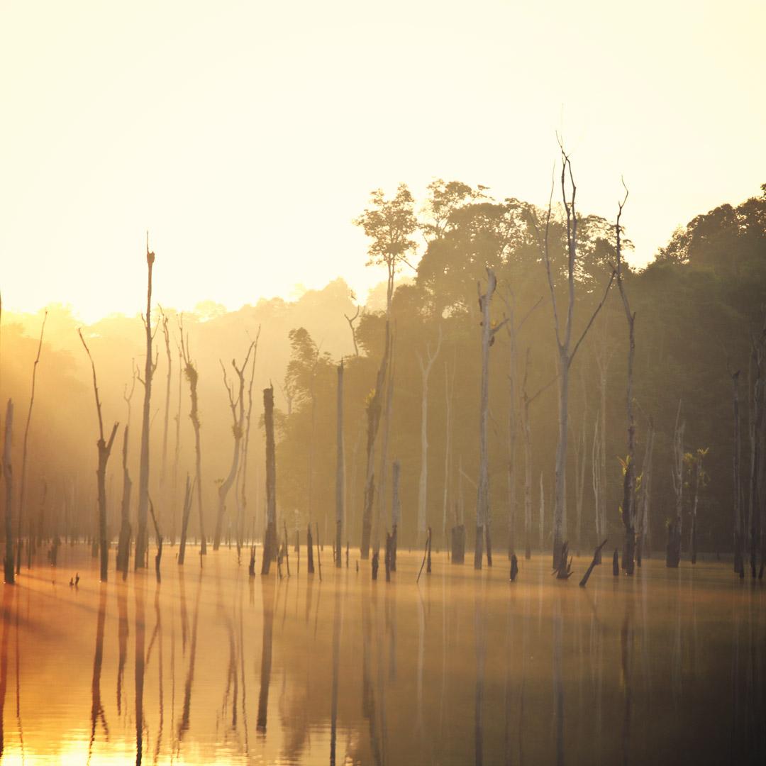 Lumière du matin